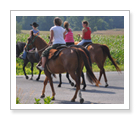 Trail Riding - Campbellcroft - $89