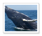 Whale Watching and Seabird Tour - Brier Island, NS - $89